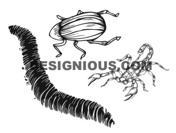 Insects brushes pack 1 Nature brushes [tag]