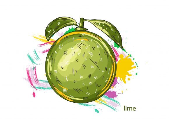 vector lime with colorful splashes Vector Illustrations old