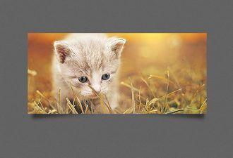 Drop-Shadow-Generator-Photoshop-Action Addons drop|generator|shadow