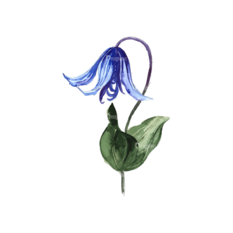 Flower Clematis Blue Clip Art - SVG & PNG vector