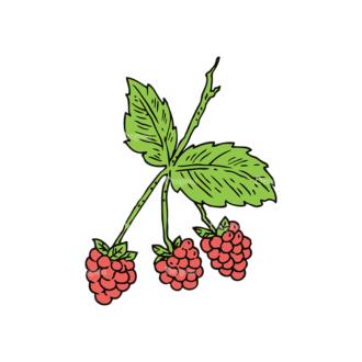 Engraved Berries Vector Set 1 Vector Berries 04 Clip Art - SVG & PNG vector