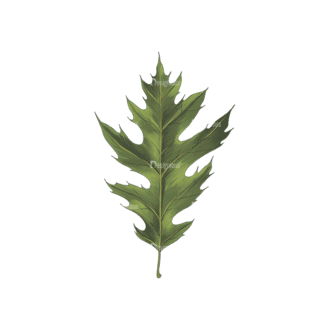 Leaves Vector 2 1 Clip Art - SVG & PNG vector
