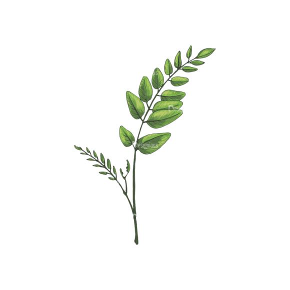 Leaves Vector 2 8 Clip Art - SVG & PNG vector