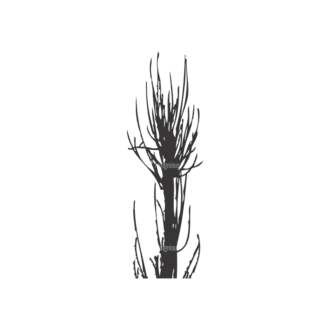 Normal Trees Vector 1 16 Clip Art - SVG & PNG vector