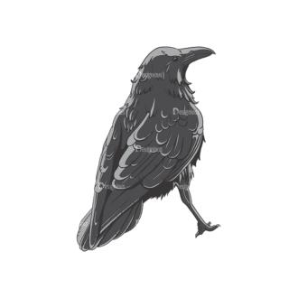 Ravens Vector 1 6 Clip Art - SVG & PNG vector