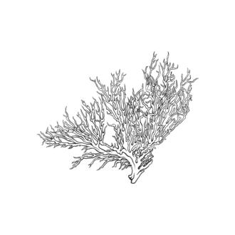 Tropical Plants Vector 1 8 Clip Art - SVG & PNG tropical