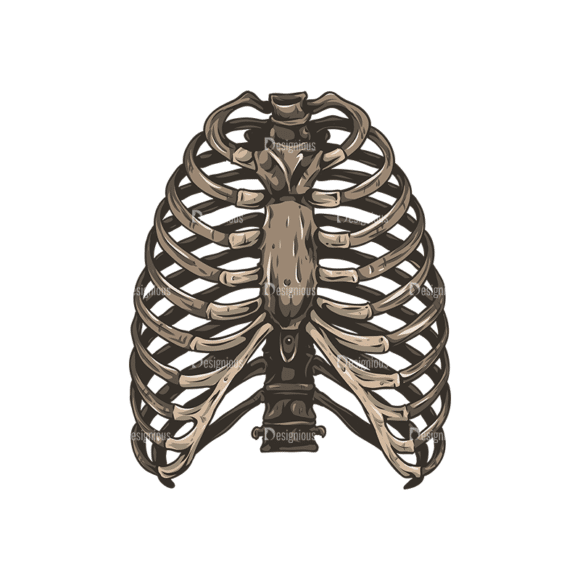Skull Vector Clipart 28-2 Clip Art - SVG & PNG vector